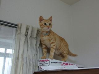 ダンボール製の猫の爪とぎ