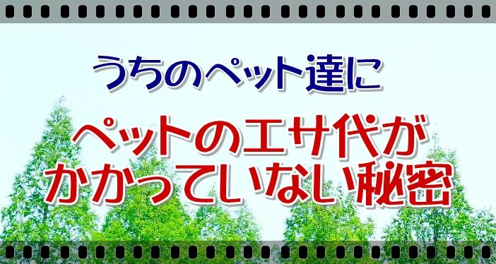 himitubana-.jpg