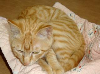 猫ベッドとミント.JPG